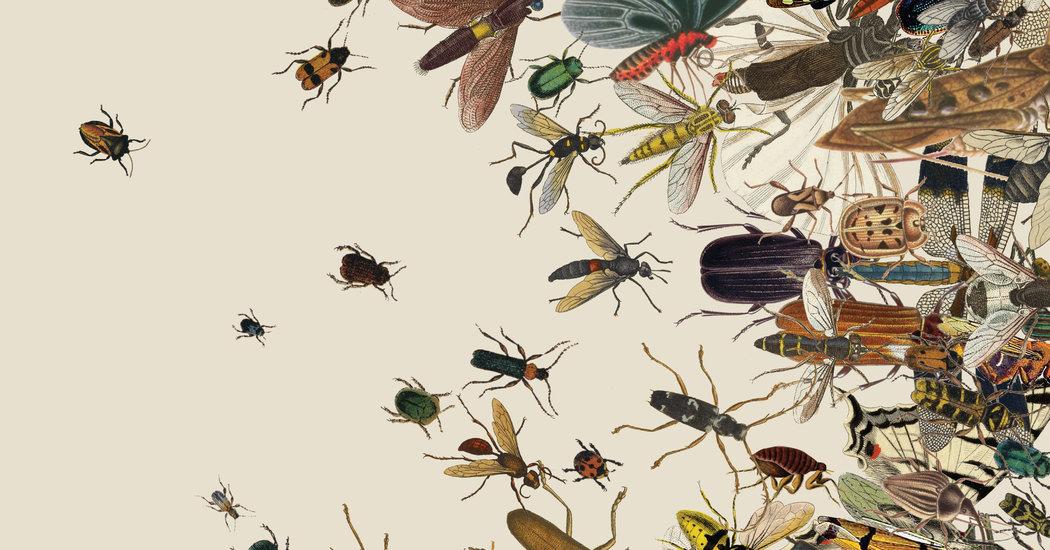 Les insectes disparaissent et avec eux, l'avenir de nos enfants.  Il est temps d'agir !